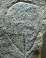 caveman vulva pic